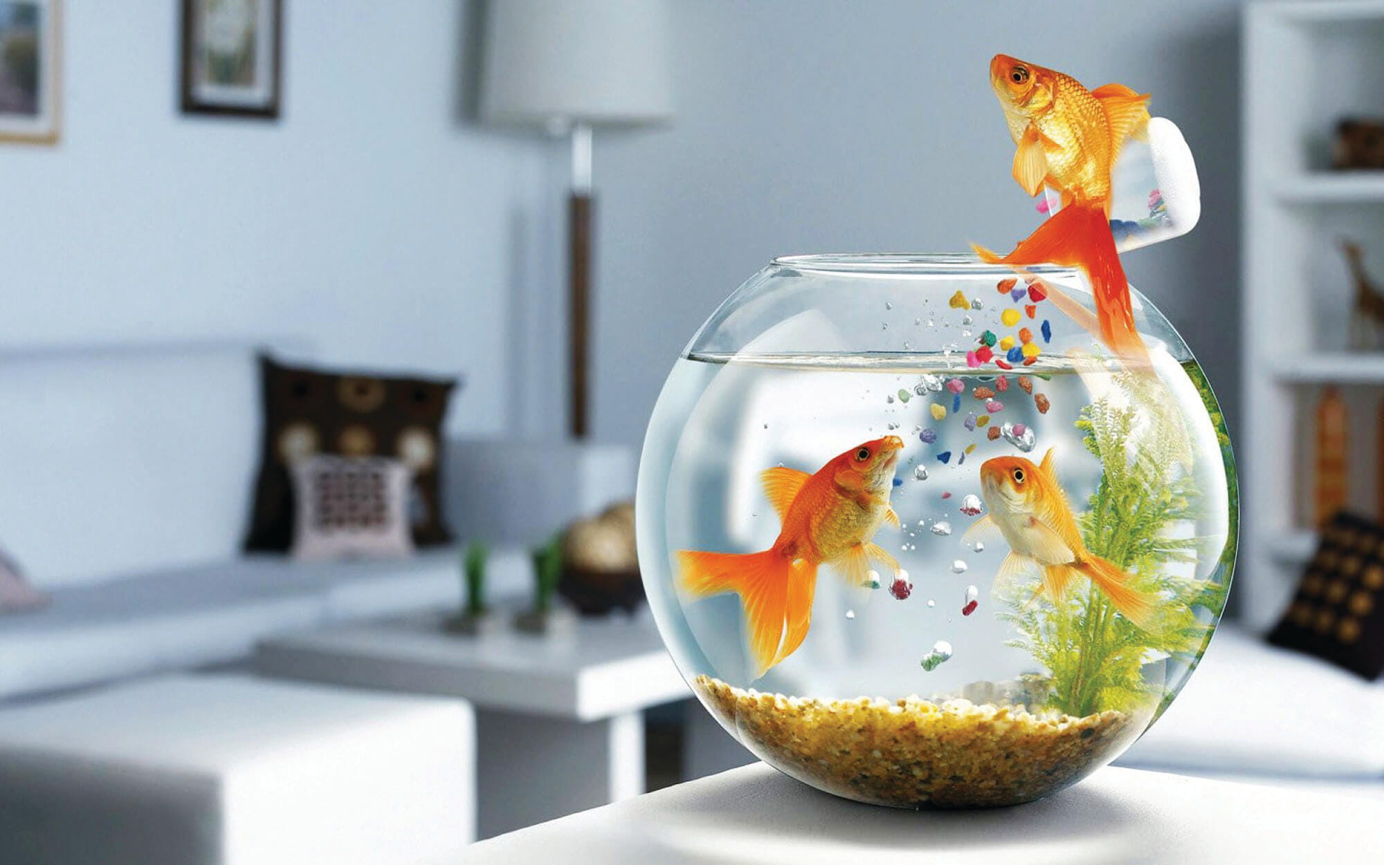 Fengshui Tips for Fish Tank