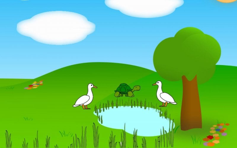 Swans-and-turtle-friends