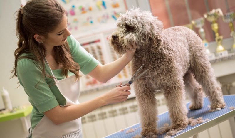 Career In Pet Grooming