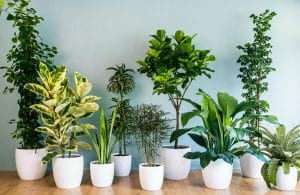 घर में हैं, हेल्दी इंडोर प्लांट्स, Healthy Plants, Purify Your Indoor Air