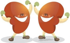 Habits Which Are Harmful For Your Kidney
